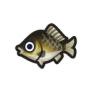 動物森友會魚類懶人包 鯽魚