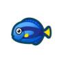 動物森友會魚類懶人包|擬刺尾鯛