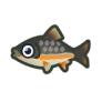 動物森友會魚類懶人包 珠星三塊魚