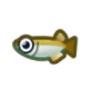 動物森友會魚類懶人包 稻田魚