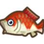 動物森友會魚類懶人包 錦鯉