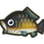 動物森友會魚類懶人包 鯉魚