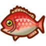 動物森友會魚類懶人包 鯛魚